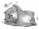 Cat02 b